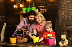 Woman, man and little boy child love nature. happy gardeners with spring flowers. Flower care watering. Soil fertilizers stock photos