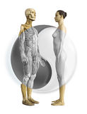 Woman man tai chi. This is body model structure for woman and man Stock Image
