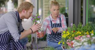 Woman and man working in floral shop stock video