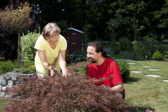 Woman and man working in the garden Stock Images