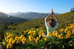 Woman meditating in meadows with sunflowers. Arnica flowers near Seattle and Leavenworth. Washington State. United States of America Royalty Free Stock Photography