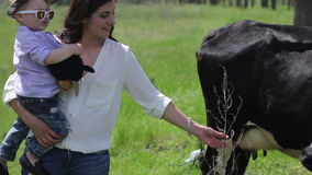 Woman meets cow stock video footage
