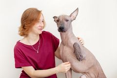 A woman with a Mexican Hairless Dog. That gives the paw Stock Image