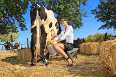 Woman milking cow. Business woman milking cow on farm stock images