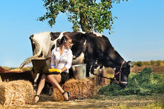 Woman milking cow. Business woman with laptop milking cow on farm stock photo