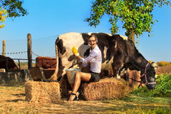 Woman milking cow Stock Image