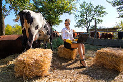 Woman milking cow Royalty Free Stock Photos