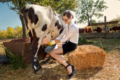 Woman milking cow. Young woman milking cow on farm stock photos