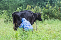 Woman milking cow Stock Images