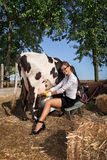 Woman milking cow. Business woman with laptop milking cow on farm royalty free stock photos