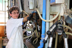 Woman Milking Cows - Dairy Farm. Portrait of a female worker in milking parlor Stock Photos