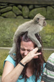 Woman with monkey on head Stock Photography