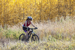 Woman Mountain Biking Stock Photography