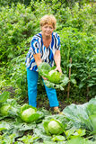 Woman near the beds of cabbage Stock Images