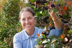 Woman  near chokeberry bush Royalty Free Stock Image