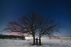 Woman near a tree against a background of a night starry sky. In winter Royalty Free Stock Images