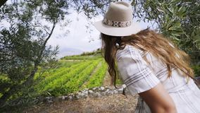 Woman near tree and field of vine plants stock video footage