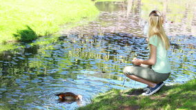 Woman nourishing a duck. In a park stock video footage