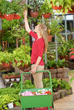 Woman in nursery shop buying plants Royalty Free Stock Photo