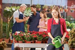 Woman in nursery shop watering plants. And flowers with watering can royalty free stock images