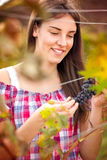 Woman observing grapes Stock Photo