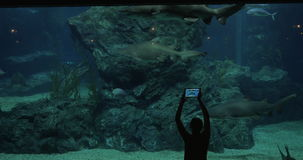Woman in oceanarium with sharks stock video