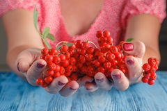 Woman offer Rowan berries on vintage wooden boards Royalty Free Stock Image