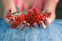 Woman offer Rowan berries on vintage wooden boards Royalty Free Stock Images
