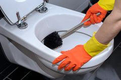 Woman in orange gloves cleaning the toilet. Woman in orange gloves cleaning out the toilet bowl with a brush to remove germs and bacteria under the rim in a Royalty Free Stock Photo