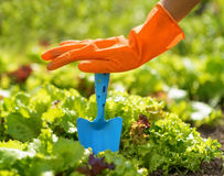 Woman in orange gloves working in the garden Royalty Free Stock Photos