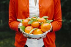 Woman holding a bowl of tangerines stock photo