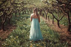 Woman in an orchard with flowers Royalty Free Stock Image
