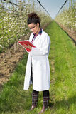 Woman in orchard Stock Photography