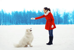 Woman owner trains white Samoyed dog outdoors in winter. Park royalty free stock photos