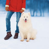 Woman owner walking with white Samoyed dog in the park Royalty Free Stock Images
