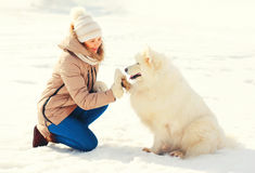 Woman owner and white Samoyed dog giving paw winter Royalty Free Stock Images