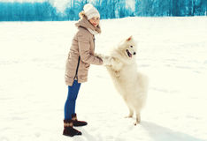 Woman owner and white Samoyed dog walking in winter Royalty Free Stock Images