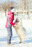 Woman owner and white Samoyed dog walking in winter Stock Photos