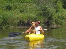 Woman paddler with dog in yellow kayak. Woman paddler with her dog leading the way in a yellow kayak on a calm river Royalty Free Stock Image