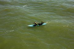 A Woman Paddles out to Catch the waves at Juno Beach. A woman paddles out to catch the waves and surf a little off shore at Juno Beach Florida royalty free stock images