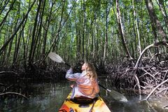 Woman paddling in kayak through mangrove forests at Krabi, Thailand. Blonde Caucasian woman paddling in orange kayak through mangrove forests at Krabi province stock photos