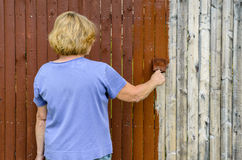 Woman Painting Fence Stock Images