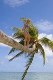 Woman on a palm tree Stock Photos