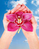 Woman palms holding pink orchid Stock Photos