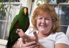 Woman with parrot. Woman holding her pet parrot, focus on the parrot Stock Photos