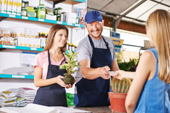 Woman paying plant in nursery shop. Of a garden center Stock Photography