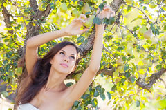 Woman in pear garden Stock Photo