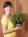 Woman with  Peperomia obtusifolia  in  pot Stock Images