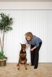 Woman with pet Doberman Royalty Free Stock Image