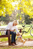 Woman pet dog. Beautiful middle aged woman playing with pet dog at the park Royalty Free Stock Images